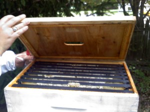 Opening up the treasure chest