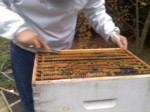 Cleaning propolis off the top bars of the upper hive body. It's so much easier in the winter than it is in the summer