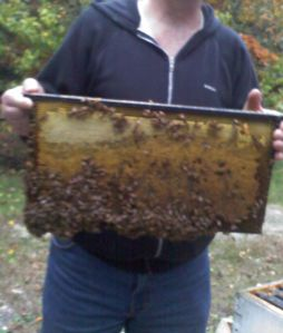 Dad Holding Bees